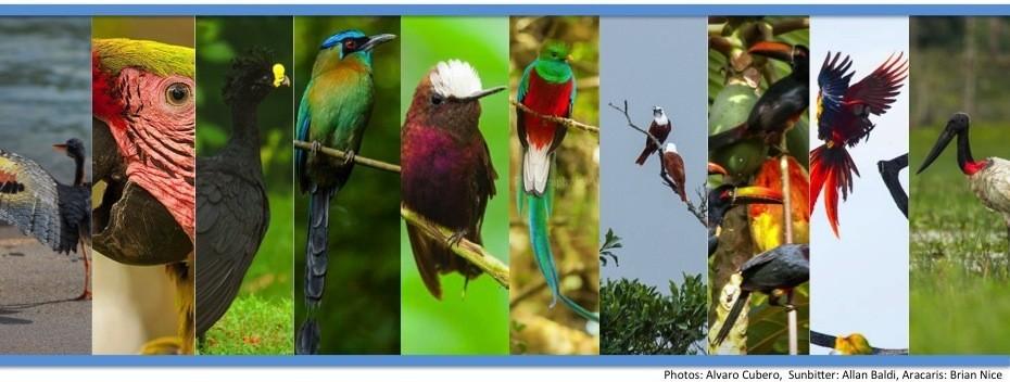 costa rica birding birds